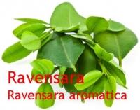 Ravensaraöl, Ravensare, 10 ml