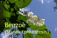 Benzoe, 10ml