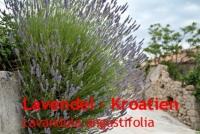 Lavendelöl, (Kro.) 30ml (100ml/22,00Euro)