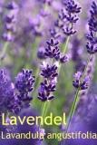 Lavendelöl, extra fein (Frankr.) 30ml (100ml/26,50Euro)