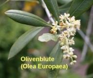 Olivenöl, 200 ml (1l/16,00 Euro)
