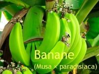 Bananen - Parfümöl, 20ml (100ml/17,50Euro)