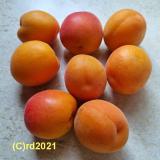 Aprikose, Parfümöl, 10 ml