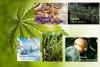 Aromatherapie Starterset 2