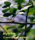 Myrrheöl, 10ml
