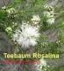 Teebaumöl, Rosalina, Rosalinaöl, Wildwuchs, 10ml