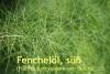 Fenchelöl, süß, 30ml (10ml/1,55Euro)