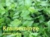 Krauseminzeöl, 20 ml (100ml/29,50Euro)