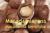Macadamianussöl, Macadamia Nussöl, 1l