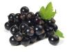 Johannisbeersamenöl, nativ, kaltgepr., 30 ml (100ml/32,00Euro)
