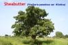 Sheabutter Nilotica, Wildsammlung, 50ml (100ml/9,00Euro)