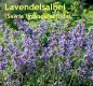 Lavendelsalbeiöl, Spanischer Salbei, 30 ml (100ml/30,00Euro)