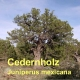 Cedernholzöl, 50 ml (Texas/USA)  (100ml/14,20Euro)