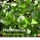 Heilpflanzenöl, 30 ml (100ml/30,50Euro)