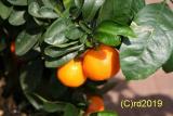 Orangenöl, süß, 100 ml