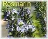Rosmarinöl, 10 ml