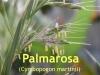 Palmarosaöl, 10ml