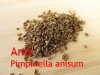 Anisöl, süß, 5ml (100ml/50,00Euro)