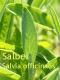 Salbeiöl, 20 ml (100ml/32,50Euro)