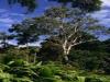 Eukalyptusöl, Zitroneneukalyptus, 30 ml  (100ml/13,00Euro)
