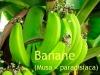 Bananen - Parfümöl, 10ml