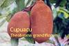 Cupuaçu - Butter, 100ml