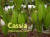 Cassiaöl, Zimt, 10 ml