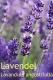 Lavendel, Parfümöl, 10 ml