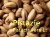 Pistazienöl, 50 ml (1l/45,00Euro)