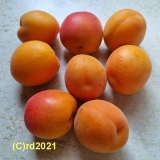 Aprikosenkernöl, raff., 100 ml