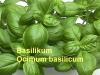 Basilikumöl,  20ml (100ml/25,00Euro)
