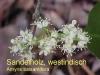 Sandelholz, Parfümöl, 30ml (100ml/18,00Euro)