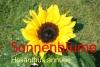 Sonnenblumenöl, raff., 500ml (1l/11,00Euro)