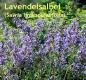 Lavendelsalbeiöl, 10 ml