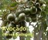 Avocadoöl, 200 ml (100ml/2,30 Euro)