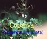 Copaivbalsam, Kopaiva, 30 ml (100ml/16,66Euro)
