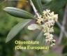 Olivenbutter, rein, 200ml (1l/32,00Euro)