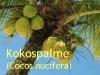 Kokosöl, raff. 500ml  (100ml/1,20Euro)