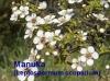 Manukaöl, 20ml, Wildsammlung (100ml/100,00Euro)